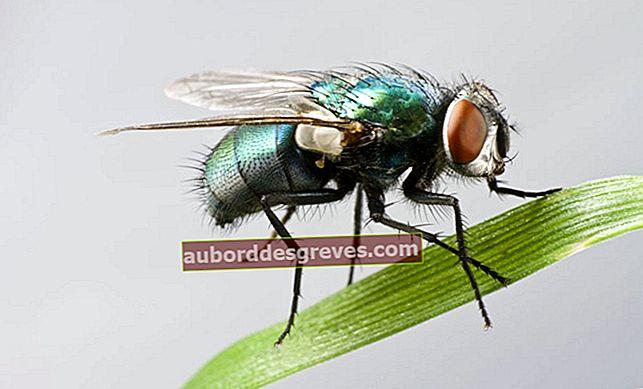 11 soluzioni per sbarazzarsi delle mosche