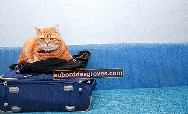 Wie reise ich mit meiner Katze?