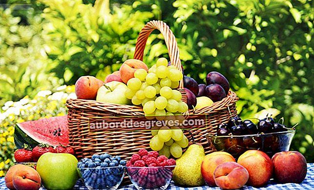 10 praktische Tipps zur richtigen Lagerung von Obst
