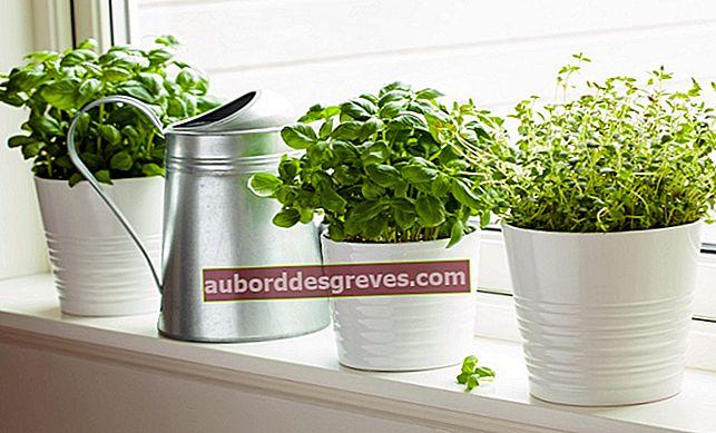 향기로운 정원을 만들기위한 5 가지 쓰레기 제로 팁