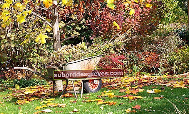 L'elenco dei lavori da svolgere in giardino in autunno