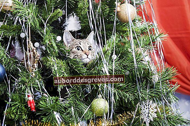 Come evitare che il tuo gatto danneggi l'albero di Natale?