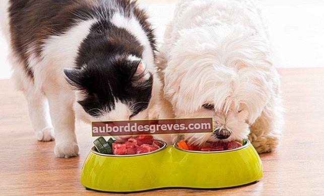 Alimenti da evitare di dare agli animali domestici