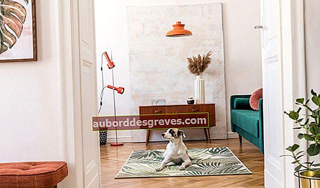 Suggerimenti diversi per mantenere pulita la casa con gli animali domestici