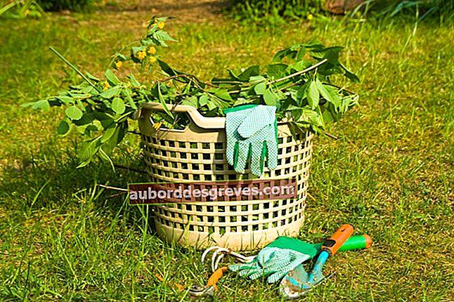 Riciclaggio o smaltimento: cosa fare con i tuoi rifiuti verdi?