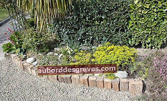 Come mantenere i bordi in giardino?