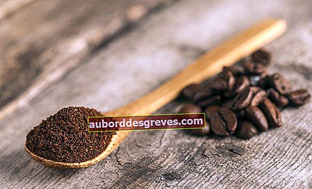 Kaffeesatz im Garten verwenden: 8 Tipps