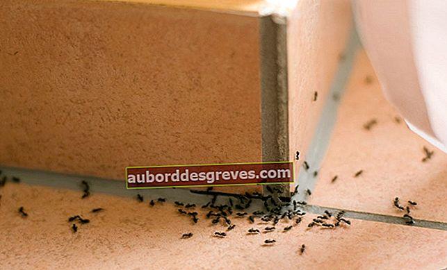 Come combattere contro un'invasione di formiche?