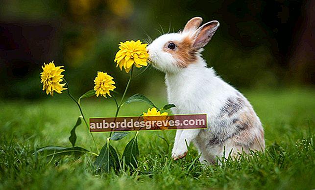 토끼가 정원에 침입하는 것을 어떻게 막을 수 있습니까?