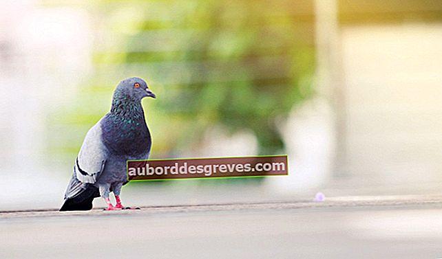 Consigli pratici per rimuovere gli escrementi di uccelli