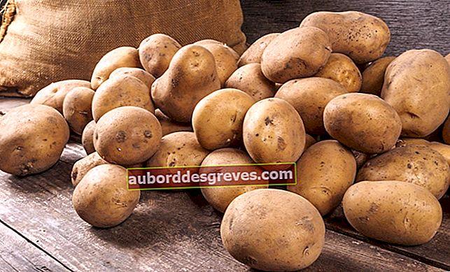 8 Techniken, um Ihre Kartoffeln gut zu halten