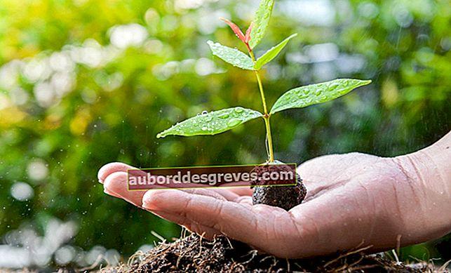 6 consigli per coltivare un albero di avocado a casa