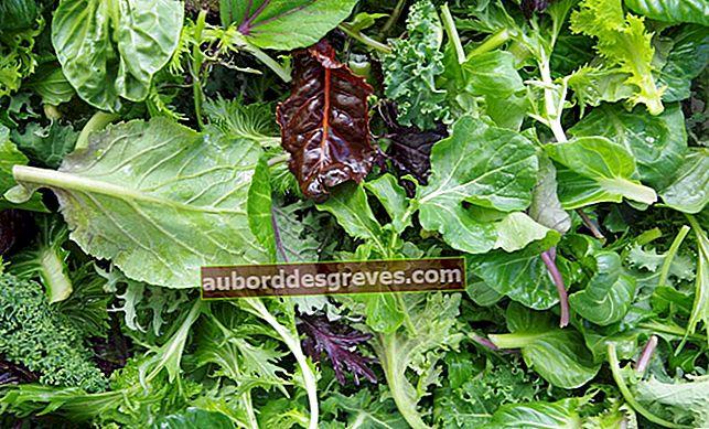 5 Tipps zur richtigen Aufbewahrung von Salat