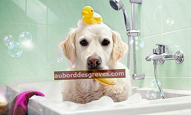 6 praktische Tipps zum richtigen Waschen Ihres Hundes
