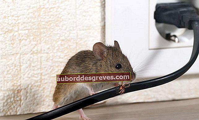9 Tipps, um Mäuse dauerhaft fernzuhalten