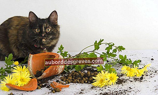 Come impedire ai gatti di entrare in giardino?