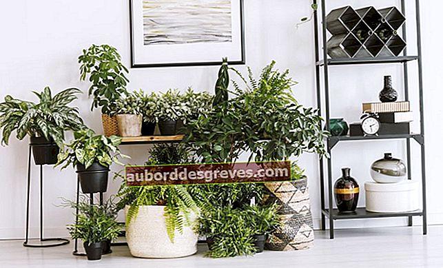 Tipps zum Reinigen der Luft mit Pflanzen