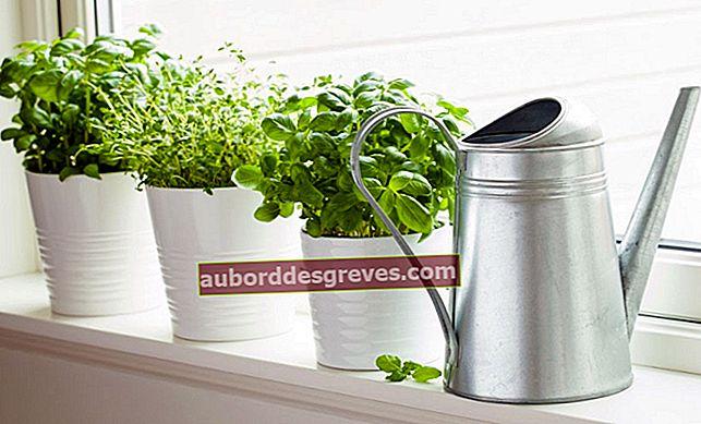 실내에서 재배하는 향기로운 식물