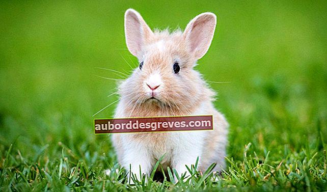 Was Sie wissen sollten, bevor Sie ein Kaninchen adoptieren